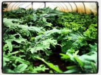 Booming Kale